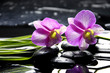 Oriental spa with orchid with and green plant on zen stones
